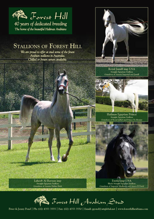 Stallions of Forest Hill